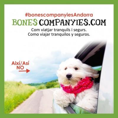 Viajes seguros con perros
