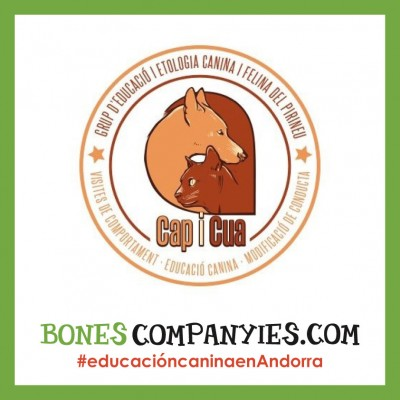 Consultas de educación canina y felina en Andorra