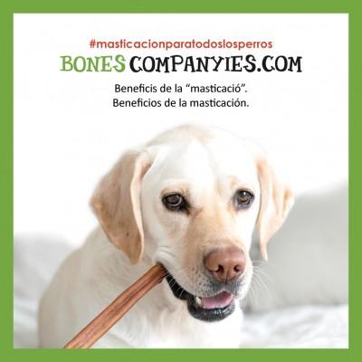 3 beneficios de la masticación en la rutina diaria del perro.