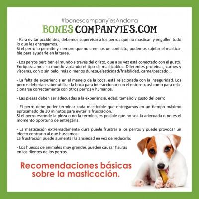 Recomendaciones sobre la masticación para perros.